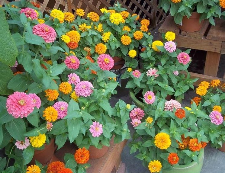 Fiori da vaso fiorista fiori per vaso for Fiori da terrazzo