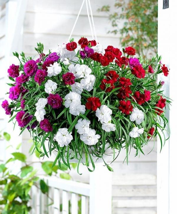 Fiori da vaso fiorista fiori per vaso for Piante da esterno in vaso perenni