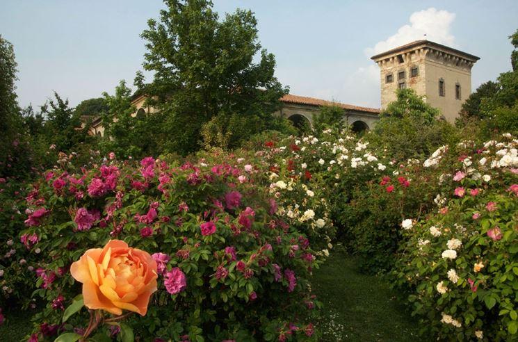 Fiori in giardino fiorista come scegliere i fiori per for Cespugli fioriti da giardino