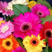 fiori agosto