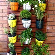 fiori per balconi