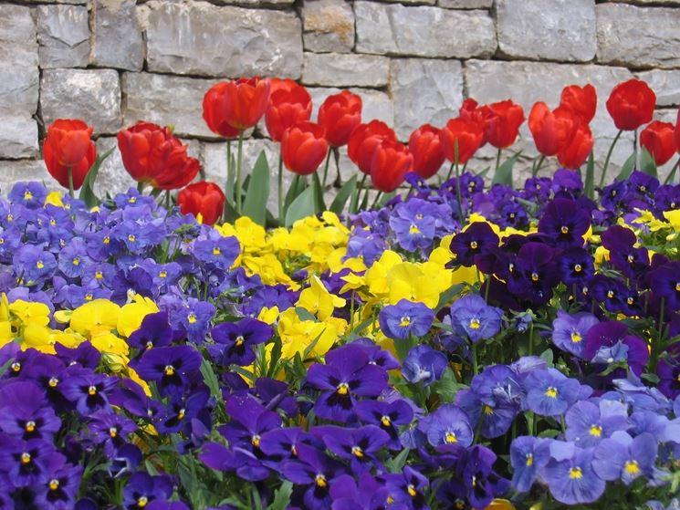 foto di fiori primaverili: crocus, tulipani e narcisi