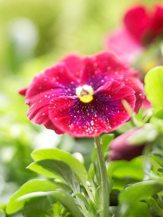 Fiori primavera fiorista fiori primaverili - Fiori primaverili ...