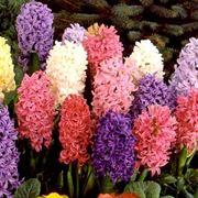 fiori primaverili elenco