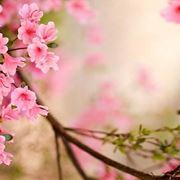 I fiori primaverili