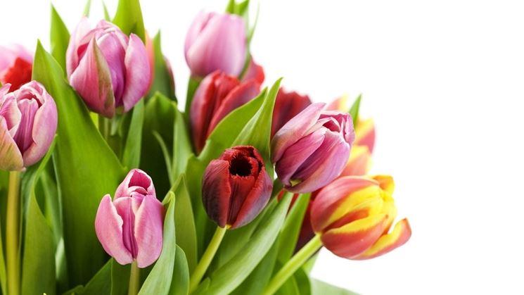 Fiori primaverili fiorista caratteristiche dei fiori - Fiori primaverili ...