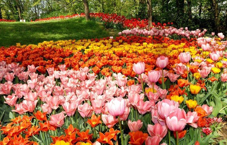 La semina dei fiori primaverili