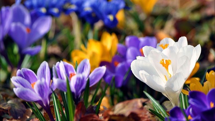 La cura dei fiori primaverili