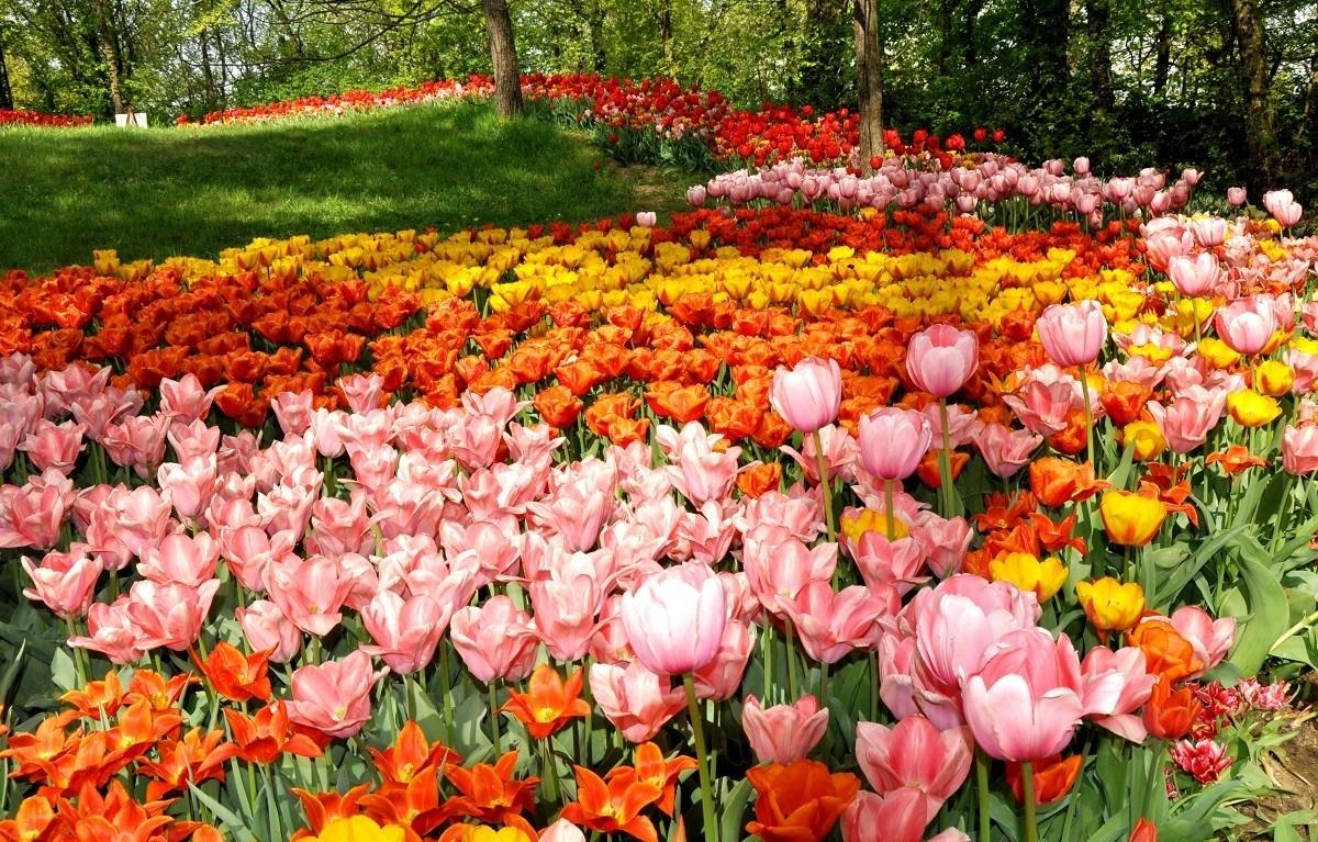 Fiori primaverili fiorista caratteristiche dei fiori - Giardino fiorito torino ...