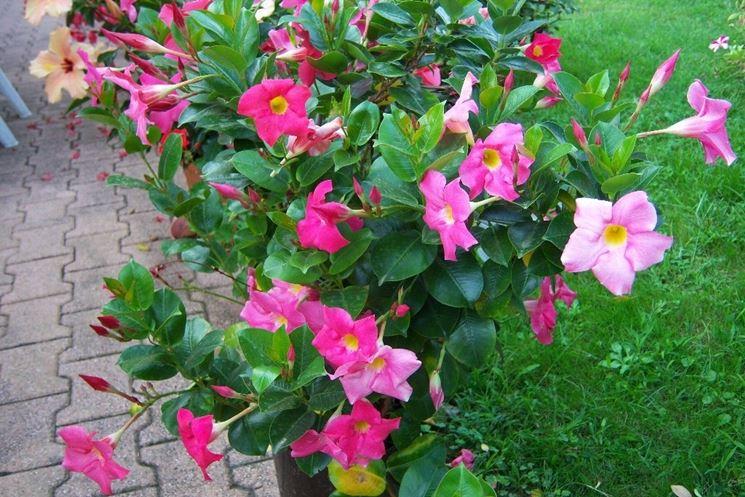 Piante vendita fiorista vendita di piante e fiori on line for Vendita semi fiori