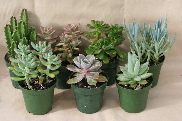 Piante grasse vendita fiorista vendita delle piante grasse for Piante vendita