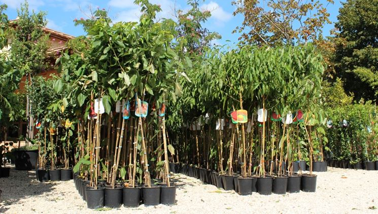 piante vendita online fiorista piante acquistabili online