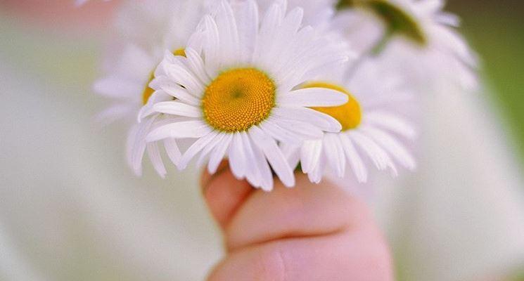 Regalare un fiore: un gesto semplice e sincero