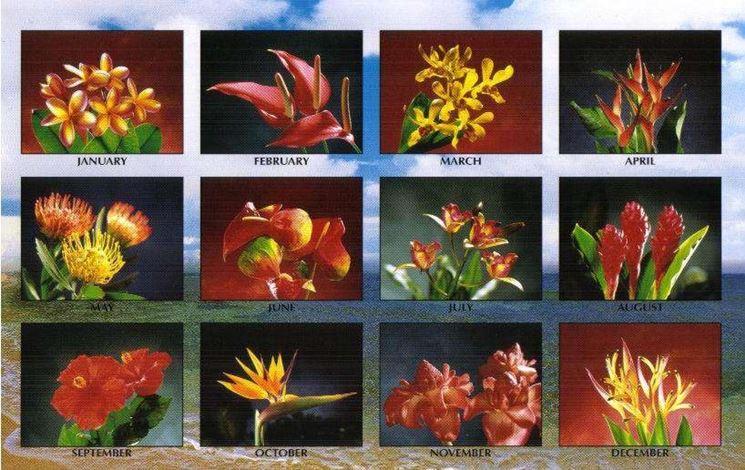 Il calendario dei fiori
