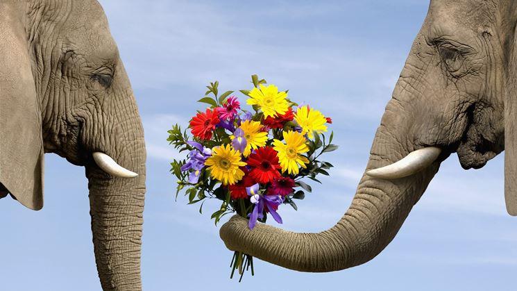 Il fiore adatto per dirti che...