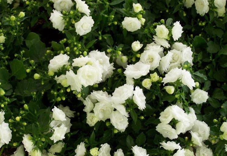 Prodotti Vendita Online Piante Giardinaggio Vivaio  Share The Knownledge