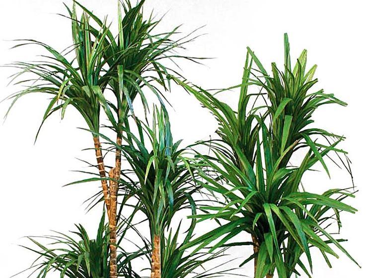 Vendita online piante - Fiorista - Vendita piante on line