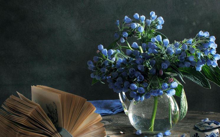 fiori blu laurea
