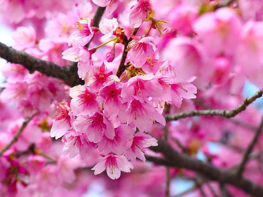 Significato loto significato fiori significato fior di for Fiori acquatici