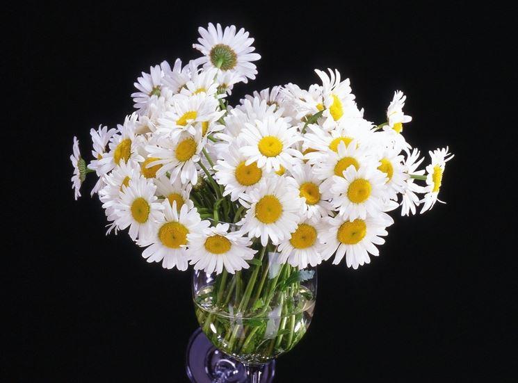fiori di margherite