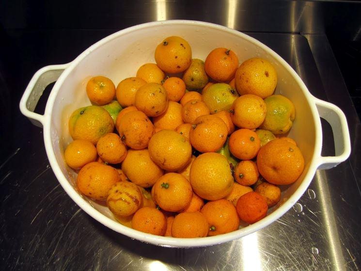 Frutti chinotto