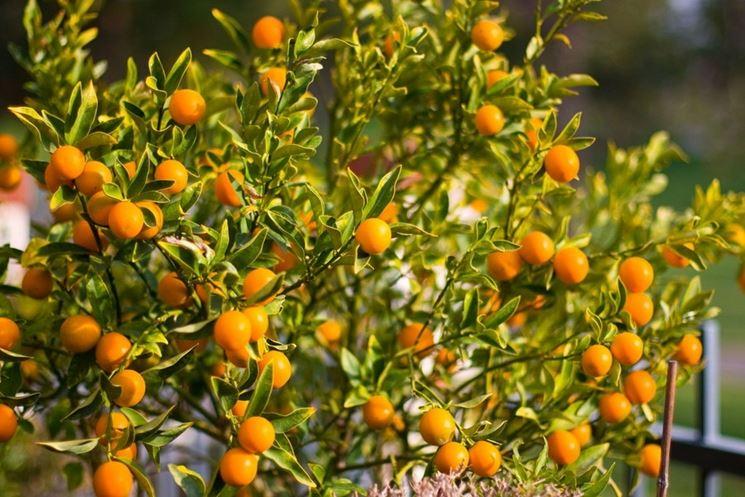 Pianta carica frutti