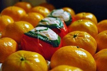 mandarino tardivo ciaculli