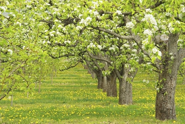 Alberi da frutto alberi da frutto coltivare albero frutto for Alberi frutta vendita