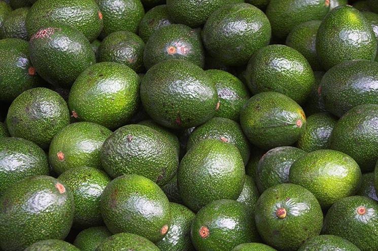 Frutti di avocado.