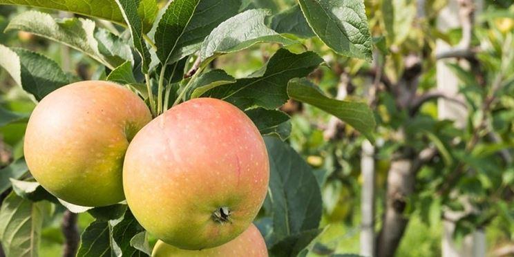 Albero frutto