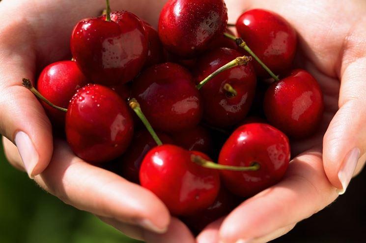 Ciliegio variet alberi da frutto variet di ciliegio for Quando piantare alberi da frutto
