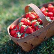 semina fragole