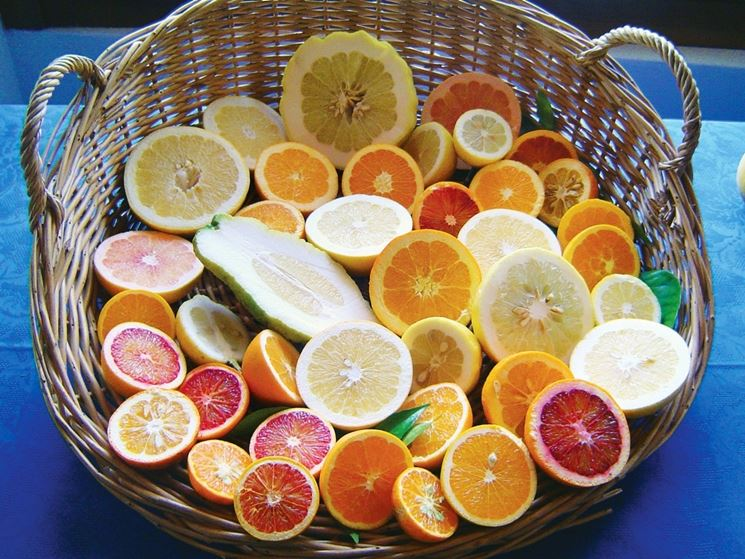 Coltivazione agrumi e cura