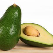 Coltivazione avocado alberi da frutto come coltivare l for Avocado coltivazione