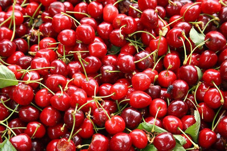 Amarene di ciliegio acido