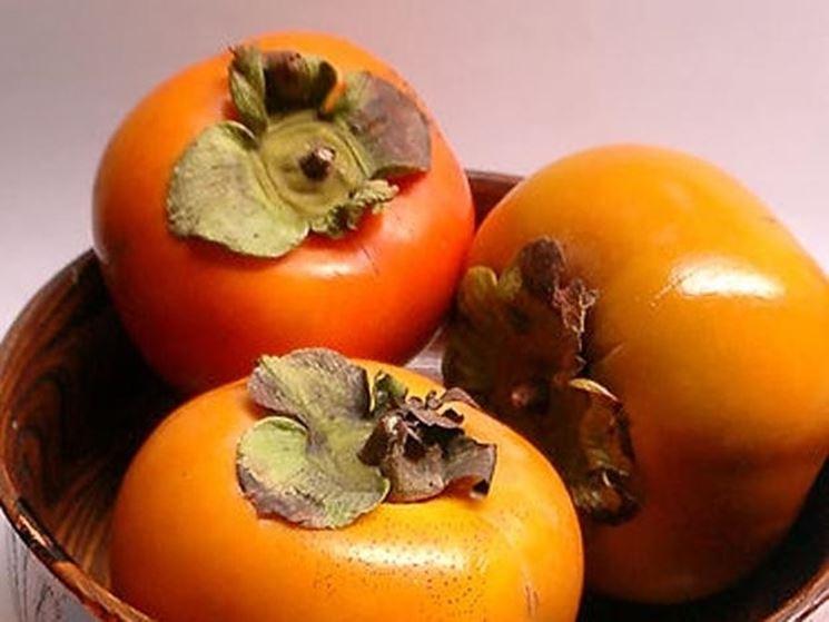 Il frutto del kaki