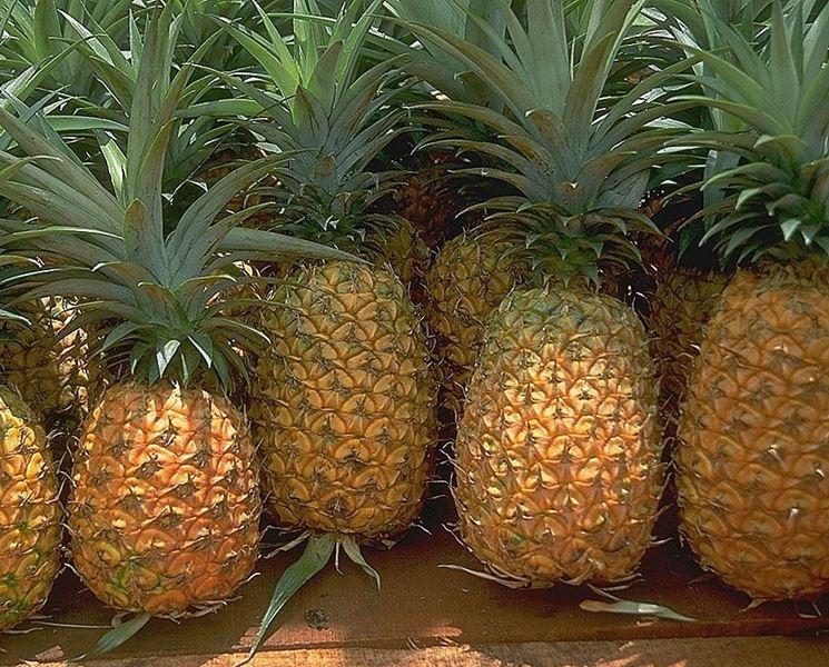 Tanti frutti di ananasso