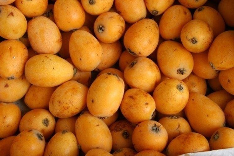 i frutti del nespolo del giappone