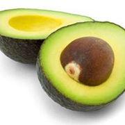 piantare avocado