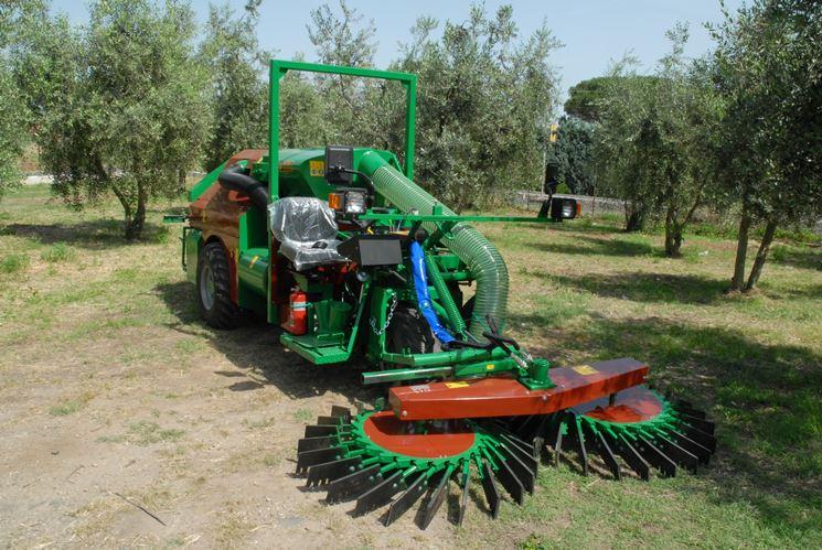 Macchina raccolta nocciole mulino elettrico per cereali for Raccogliere castagne