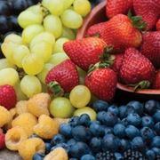 generalit�  delle piante da frutto