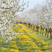 trattamenti piante da frutto
