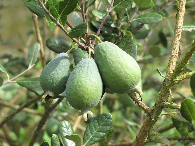 Frutti piante