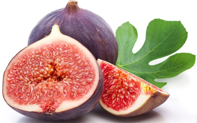 fico frutto