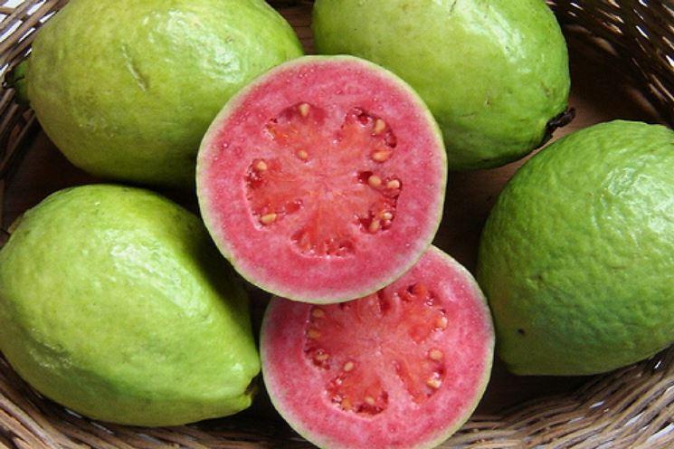 guava frutti