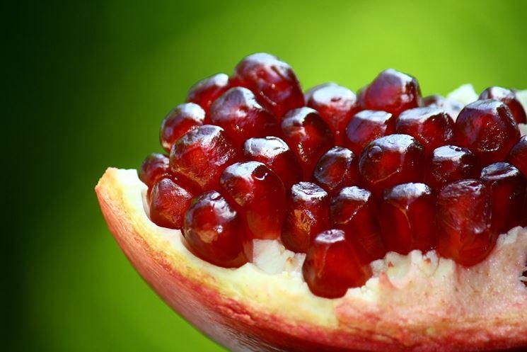 Frutto pianta melograno