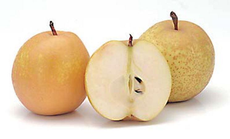 Frutti nashi
