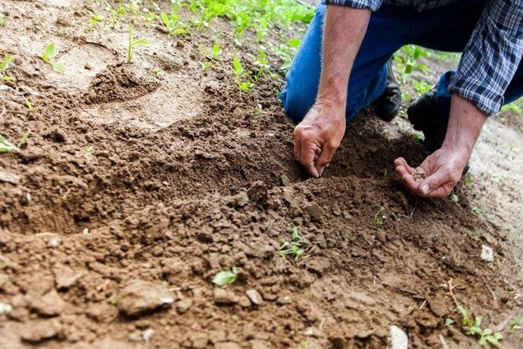 Pianta terreno concimazione