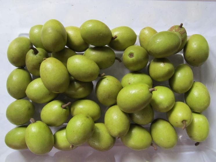 Frutti dell'ulivo
