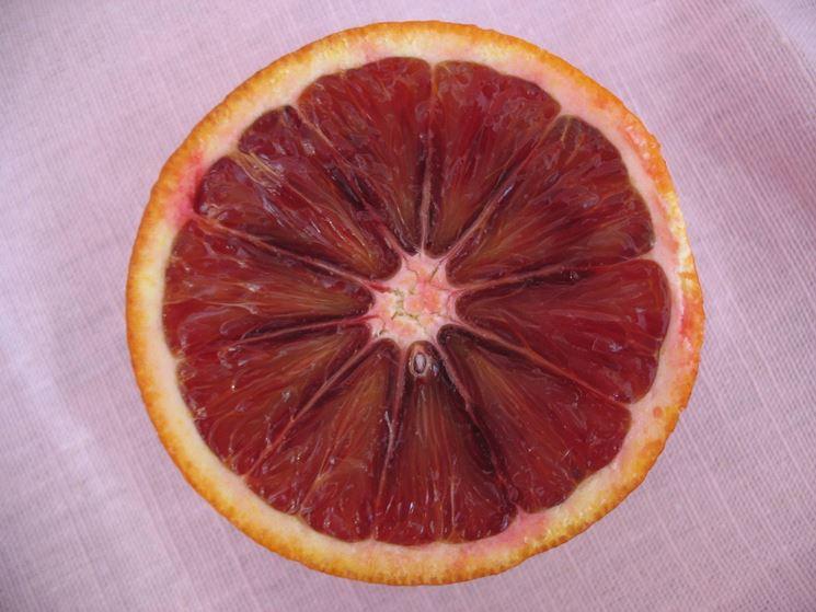 arancia rossa 2